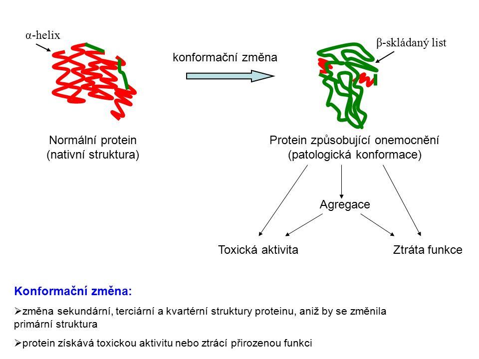 α-helix β-skládaný list Normální protein (nativní struktura) Protein způsobující onemocnění (patologická konformace) konformační změna Agregace Toxická aktivitaZtráta funkce Konformační změna:  změna sekundární, terciární a kvartérní struktury proteinu, aniž by se změnila primární struktura  protein získává toxickou aktivitu nebo ztrácí přirozenou funkci