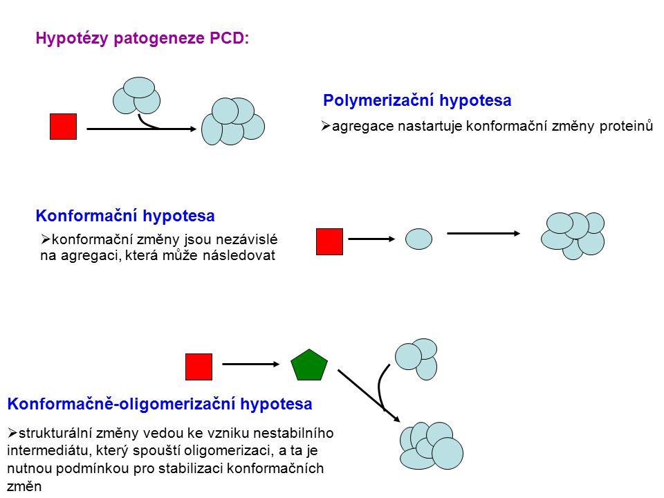 Konformační hypotesa Polymerizační hypotesa Konformačně-oligomerizační hypotesa  agregace nastartuje konformační změny proteinů  konformační změny jsou nezávislé na agregaci, která může následovat  strukturální změny vedou ke vzniku nestabilního intermediátu, který spouští oligomerizaci, a ta je nutnou podmínkou pro stabilizaci konformačních změn Hypotézy patogeneze PCD:
