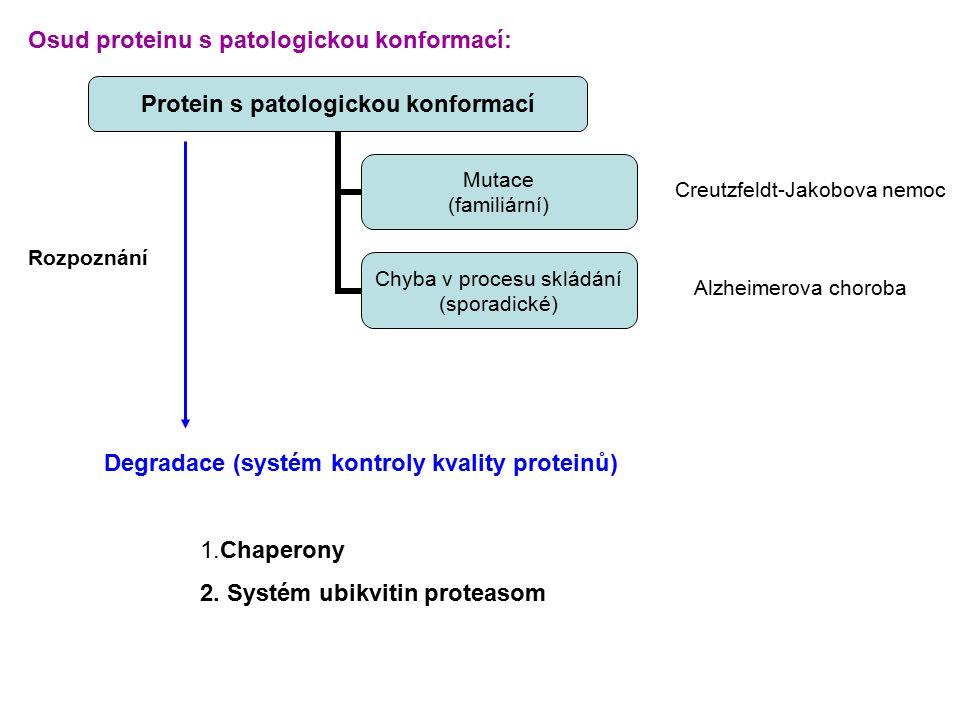 Protein s patologickou konformací Mutace (familiární) Chyba v procesu skládání (sporadické) Degradace (systém kontroly kvality proteinů) 1.Chaperony 2.