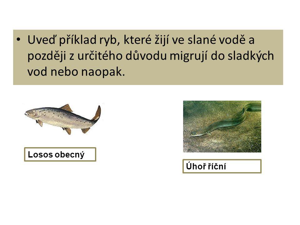 Uveď příklad ryb, které žijí ve slané vodě a později z určitého důvodu migrují do sladkých vod nebo naopak. Losos obecný Úhoř říční