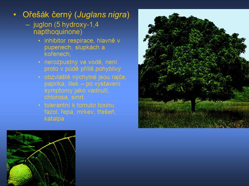 Ořešák černý (Juglans nigra) –juglon (5 hydroxy-1,4 napthoquinone) inhibitor respirace, hlavně v pupenech, slupkách a kořenech, nerozpustný ve vodě, n