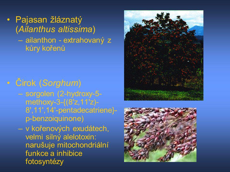 Pajasan žláznatý (Ailanthus altissima) –ailanthon - extrahovaný z kůry kořenů Čirok (Sorghum) –sorgolen (2-hydroxy-5- methoxy-3-{(8'z,11'z)- 8',11',14