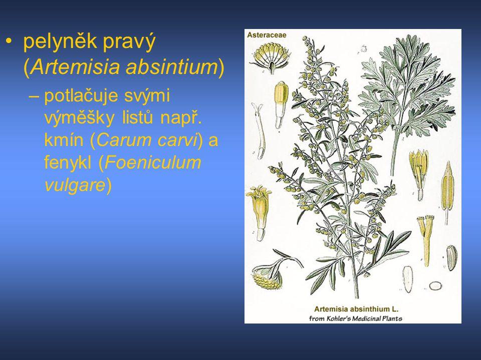 pelyněk pravý (Artemisia absintium) –potlačuje svými výměšky listů např. kmín (Carum carvi) a fenykl (Foeniculum vulgare)