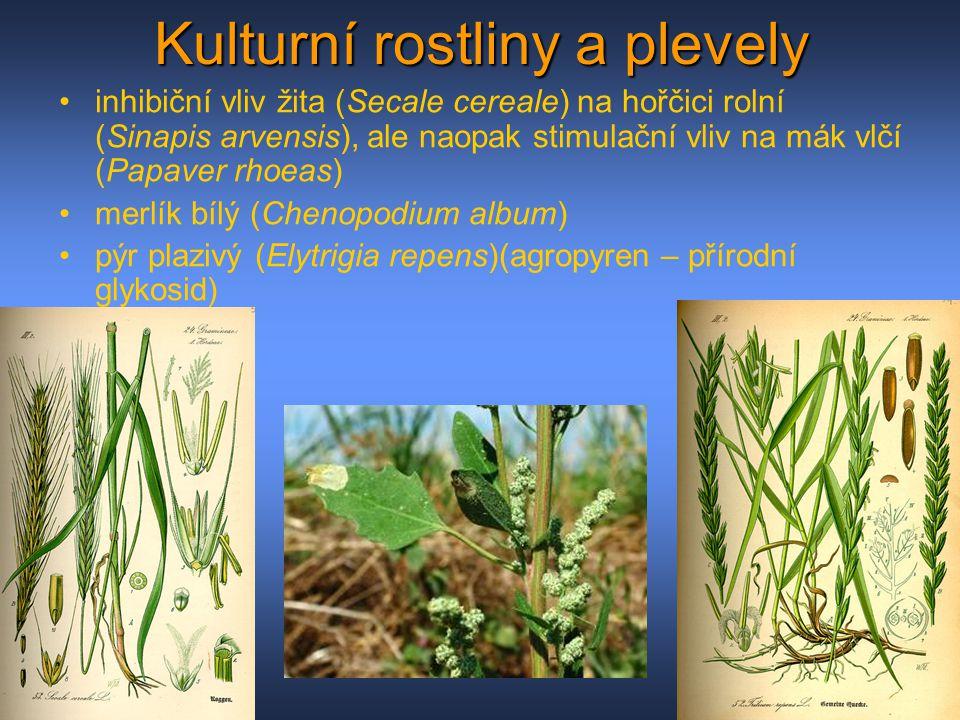 Kulturní rostliny a plevely inhibiční vliv žita (Secale cereale) na hořčici rolní (Sinapis arvensis), ale naopak stimulační vliv na mák vlčí (Papaver