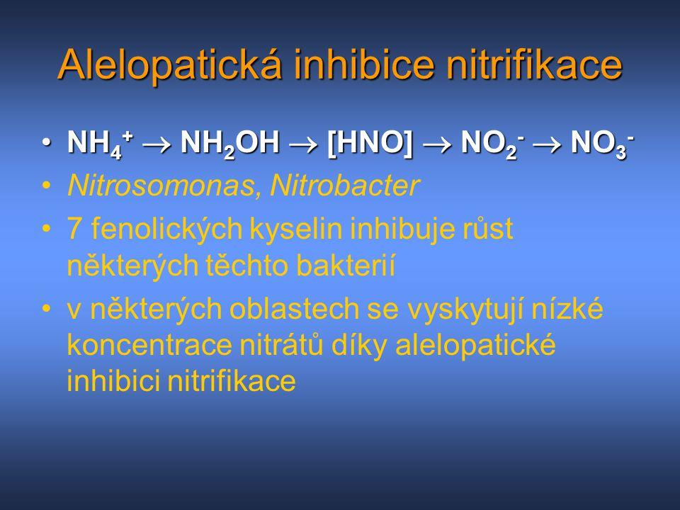 Alelopatická inhibice nitrifikace NH 4 +  NH 2 OH  [HNO]  NO 2 -  NO 3 -NH 4 +  NH 2 OH  [HNO]  NO 2 -  NO 3 - Nitrosomonas, Nitrobacter 7 fen