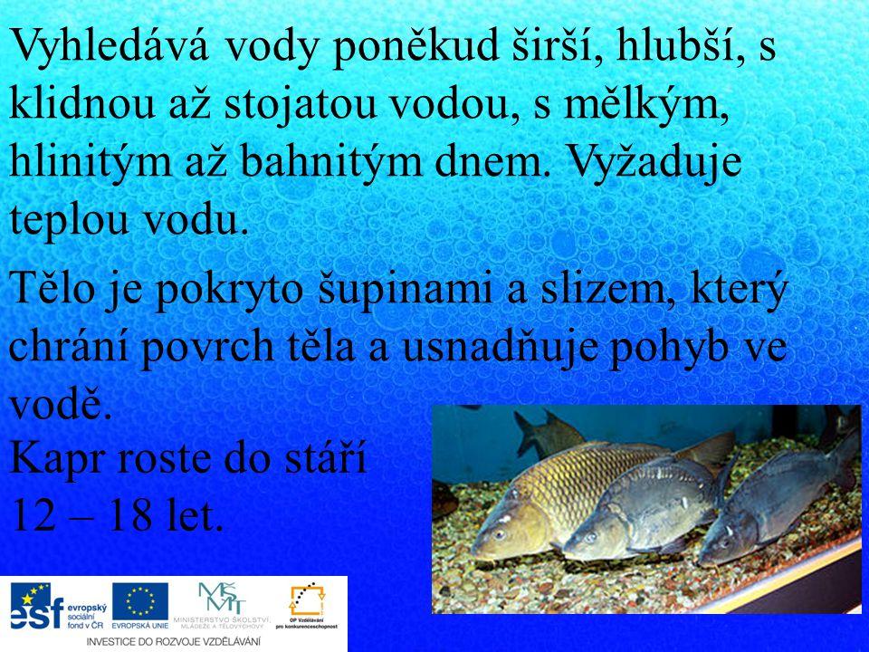 Rozmnožování kaprů se odehrává ve vodě, samice (jikrnačka) klade vajíčka, kterým říkáme jikry.