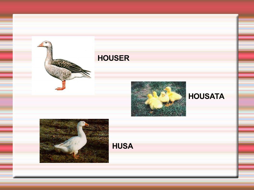 HOUSER HUSA HOUSATA