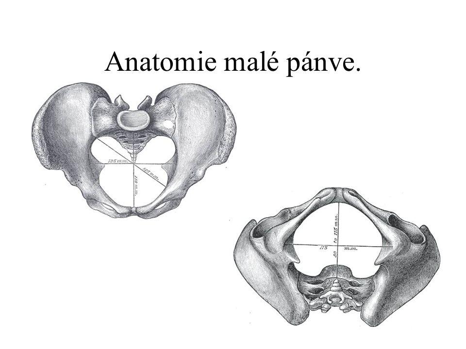 Anatomie malé pánve.