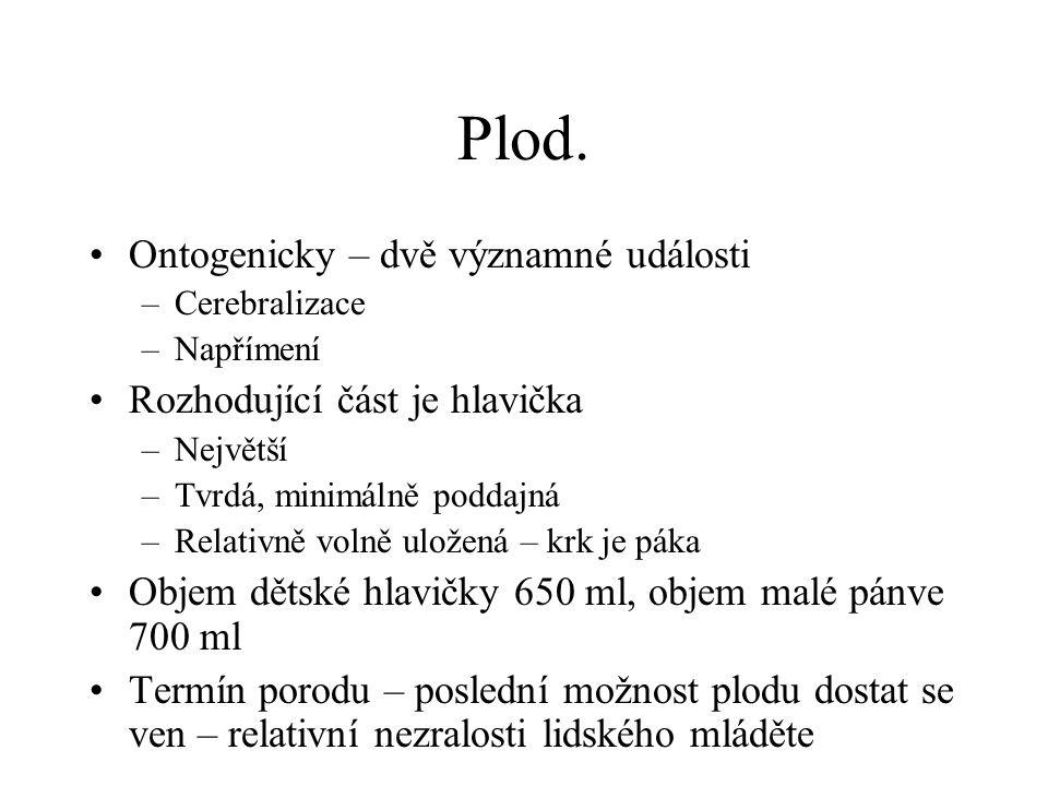 Plod anatomie hlavičky 1.