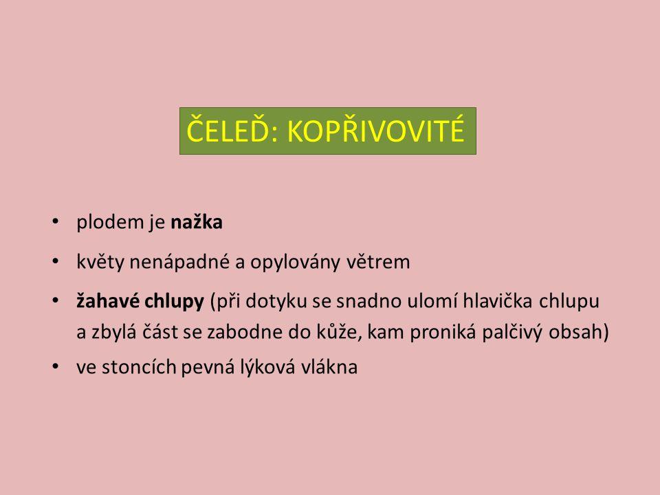 kopřiva dvoudomá – Urtica dioica V: do 1,5 m S: čtyřhranný, žahavé chlupy L: podlouhle vejčité, pilovité, zašpičatělé, vstřícné na líci žahavé chlupy K: světle zelené, v paždí listů, dvoudomé E: nitrofilní druh, vlhčí půdy, (luhy, pod akáty), polostín až světlomilná Z: léčivka (močopudná, protizá- nětlivá, očistné kůry, vlasy), salát, špenát, krmivo pro drůbež před použitím je nutné listy spařit
