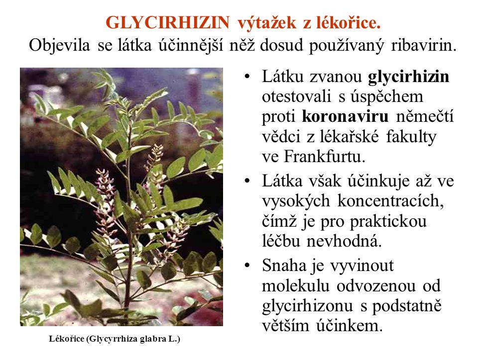 Látku zvanou glycirhizin otestovali s úspěchem proti koronaviru němečtí vědci z lékařské fakulty ve Frankfurtu. Látka však účinkuje až ve vysokých kon