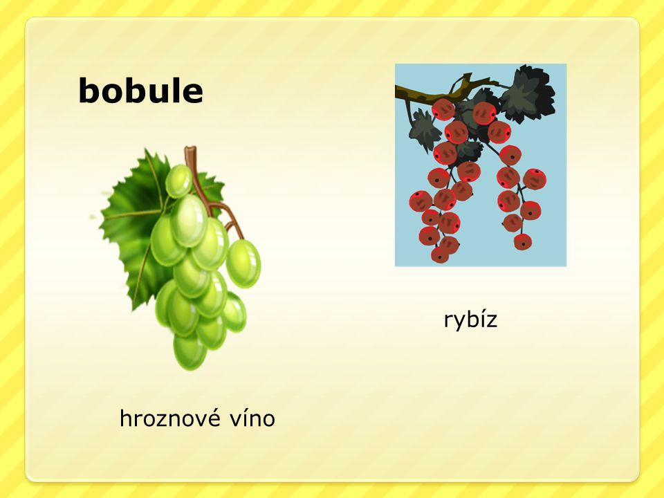 bobule hroznové víno rybíz