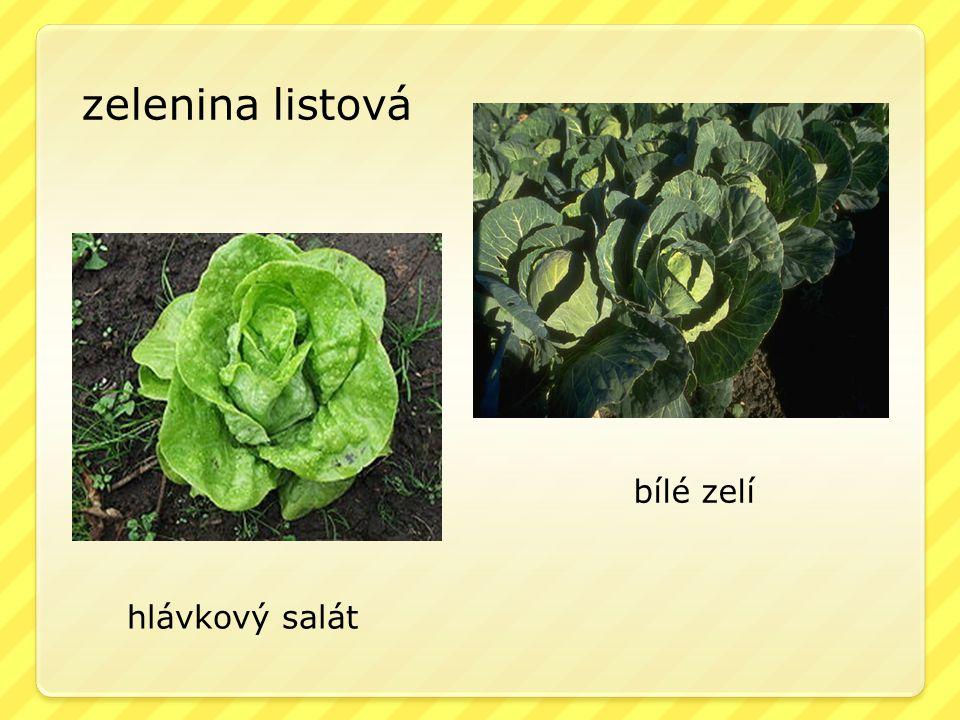 zelenina listová hlávkový salát bílé zelí
