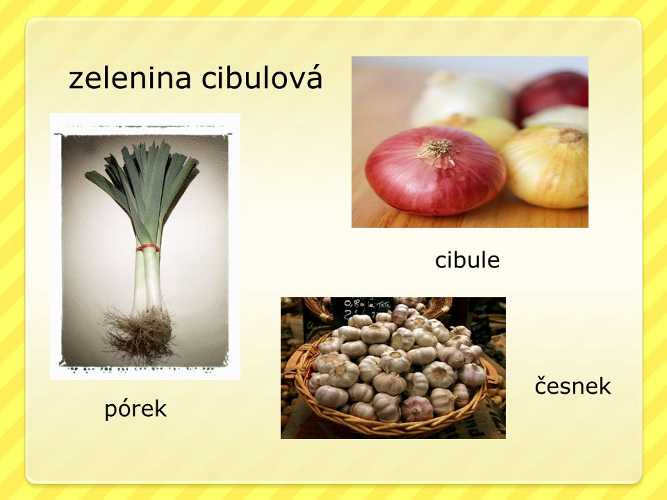 zelenina cibulová pórek cibule česnek