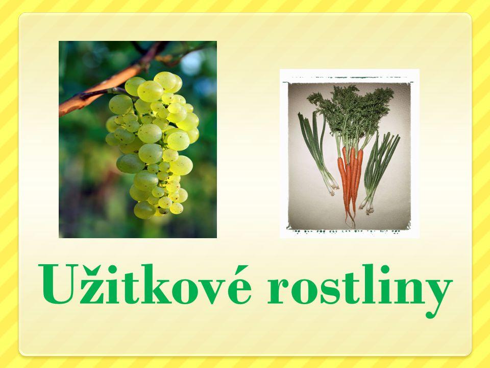 Peckovice, malvice, bobule Druhy zeleniny Hospodářské plodiny