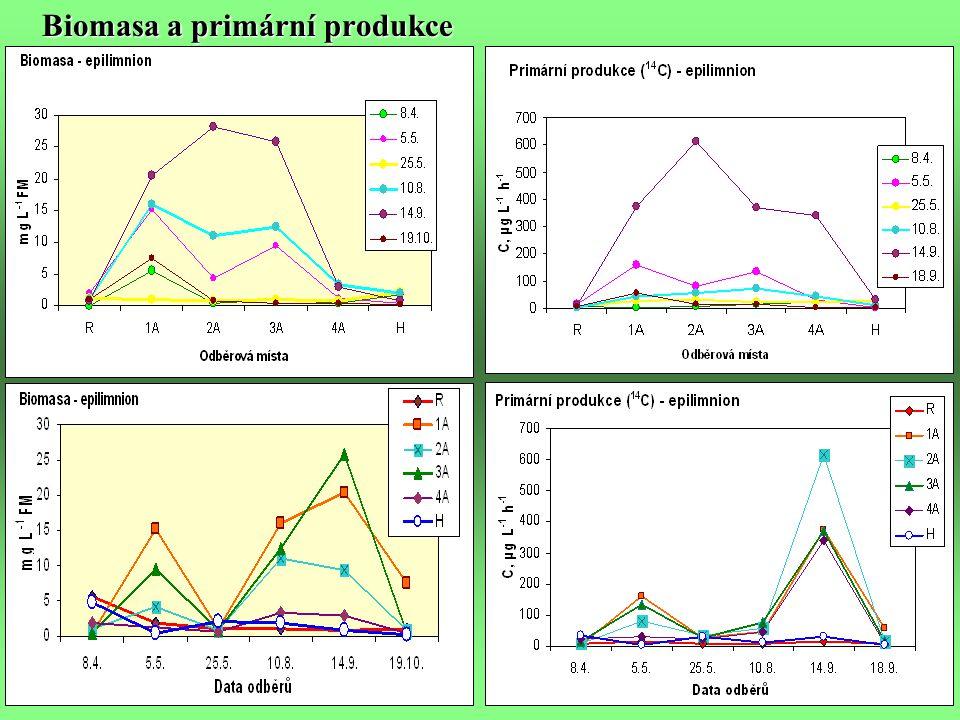 Biomasa a primární produkce