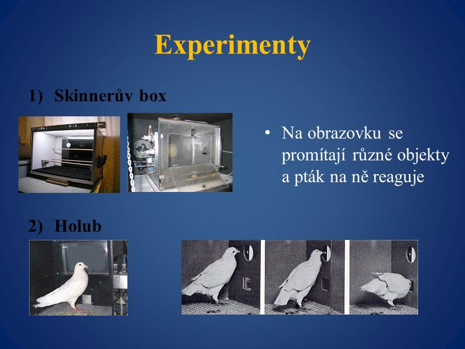 Experimenty 1)Skinnerův box 2)Holub Na obrazovku se promítají různé objekty a pták na ně reaguje