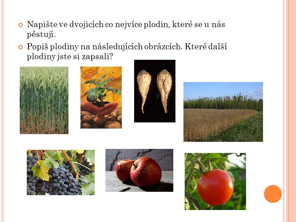 Napište ve dvojicích co nejvíce plodin, které se u nás pěstují.
