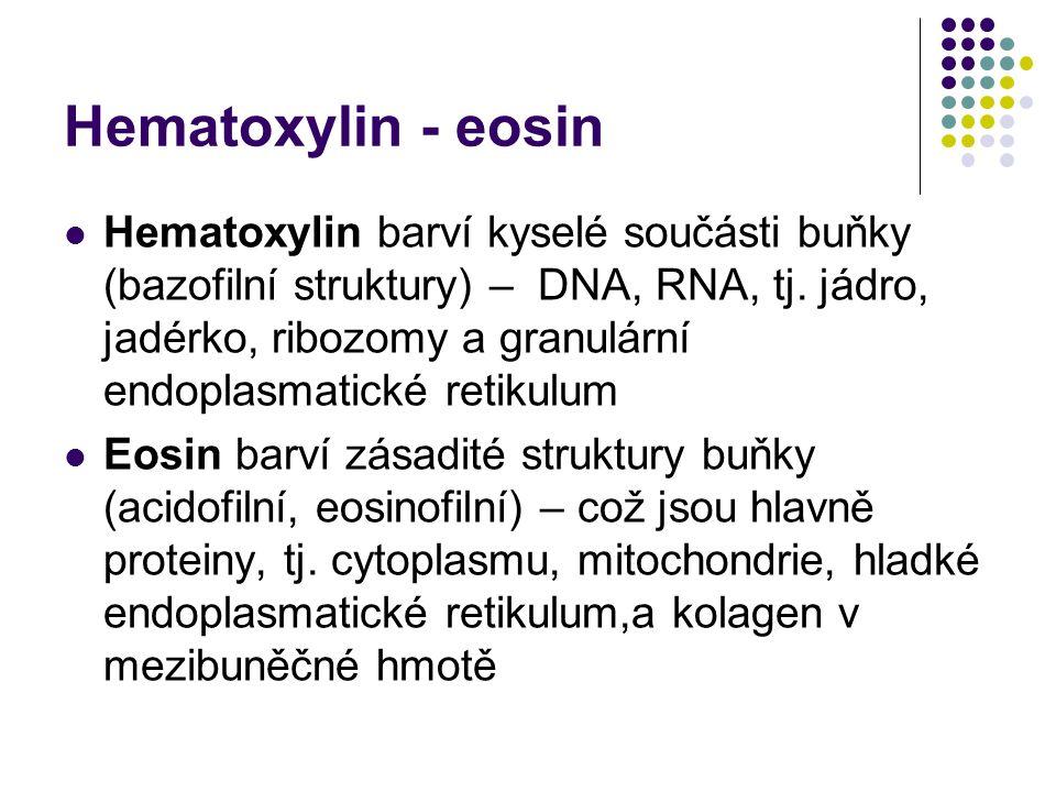 Hematoxylin - eosin Hematoxylin barví kyselé součásti buňky (bazofilní struktury) – DNA, RNA, tj. jádro, jadérko, ribozomy a granulární endoplasmatick