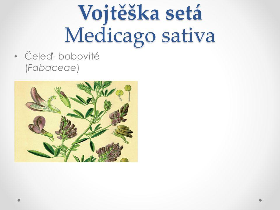 Vojtěška setá Medicago sativa Čeleď- bobovité (Fabaceae)