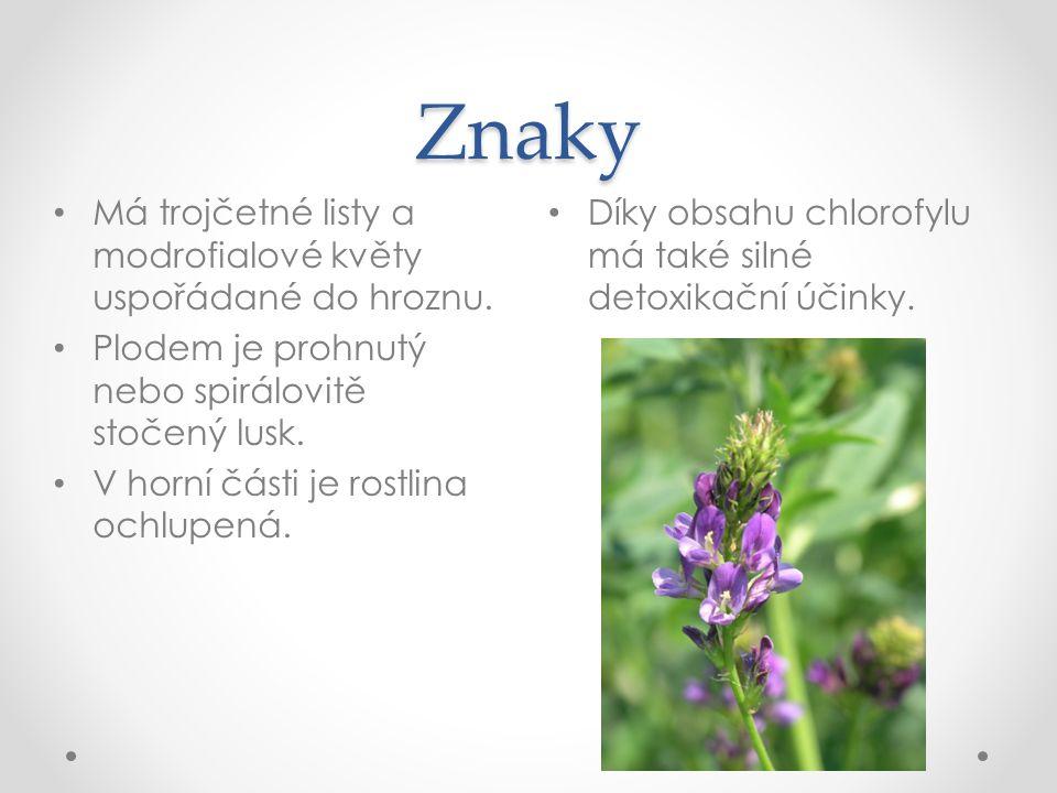Znaky Díky obsahu chlorofylu má také silné detoxikační účinky. Má trojčetné listy a modrofialové květy uspořádané do hroznu. Plodem je prohnutý nebo s