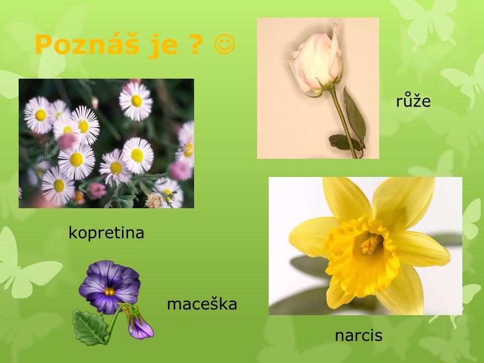 Léčivé rostliny : Obsahují léčivé látky.