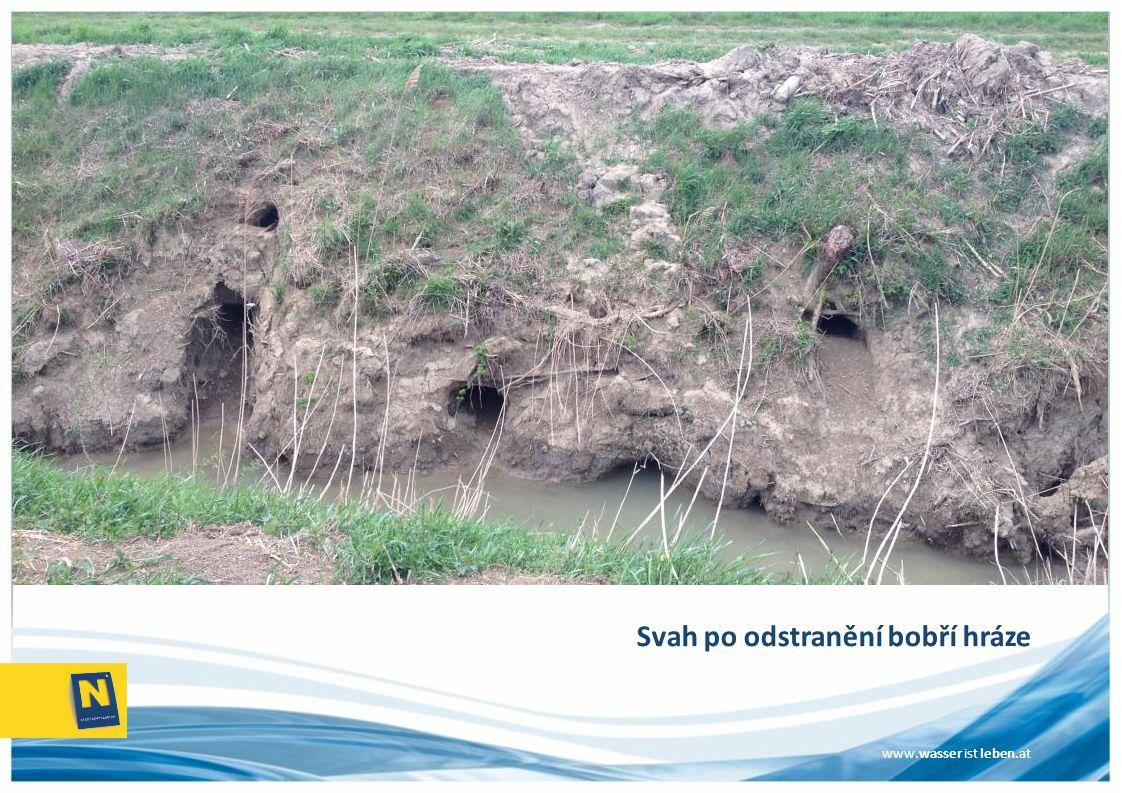www.wasser ist leben.at Svah po odstranění bobří hráze