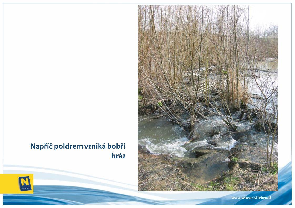 www.wasser ist leben.at Napříč poldrem vzniká bobří hráz