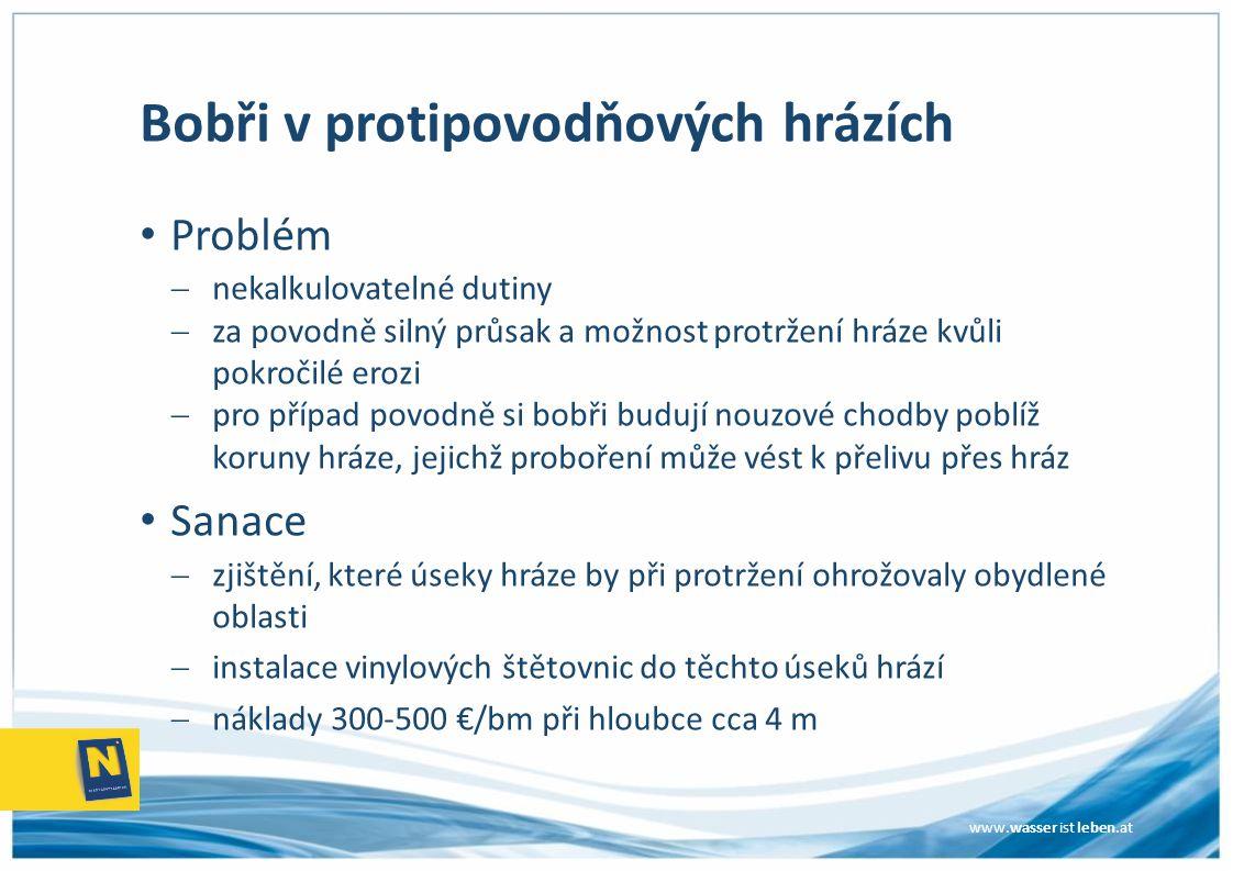 www.wasser ist leben.at Bobři v protipovodňových hrázích Problém  nekalkulovatelné dutiny  za povodně silný průsak a možnost protržení hráze kvůli p