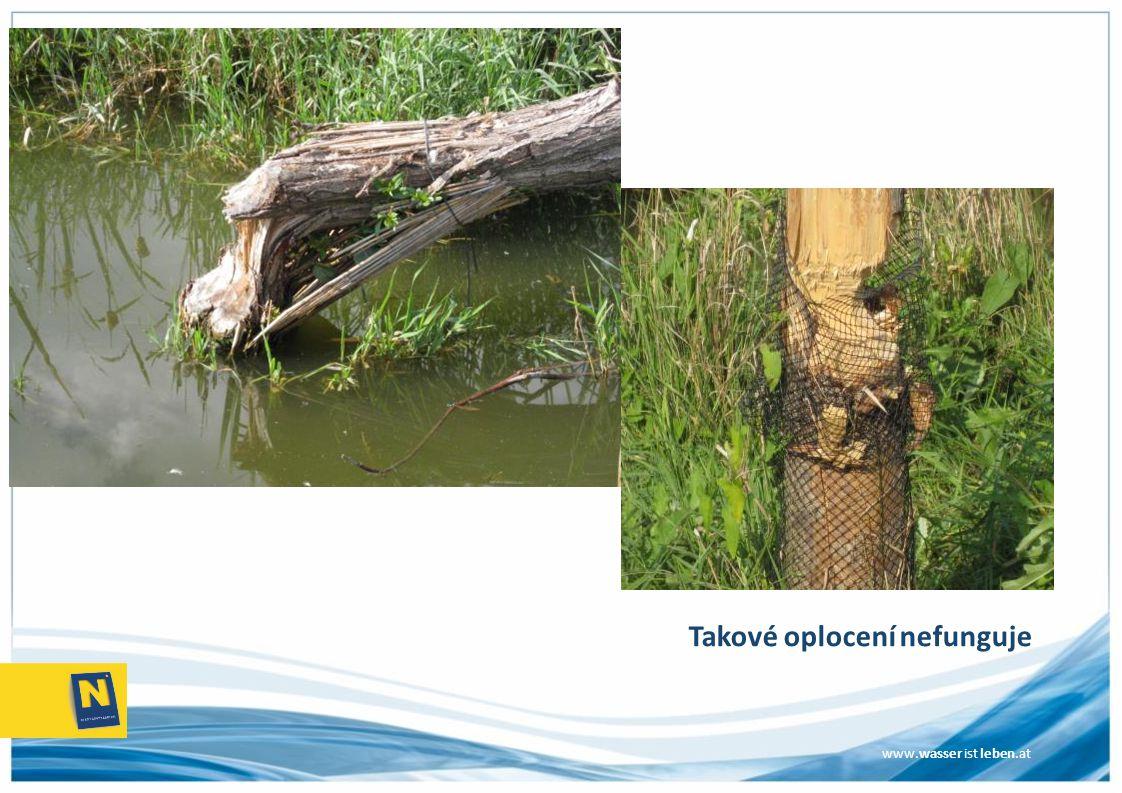www.wasser ist leben.at Bobři a břehové porosty Plnění rámcové směrnice EU o vodě  povrchové vody se musí chránit, zlepšovat a sanovat tak, aby se dosáhlo dobrého ekologického stavu, resp.