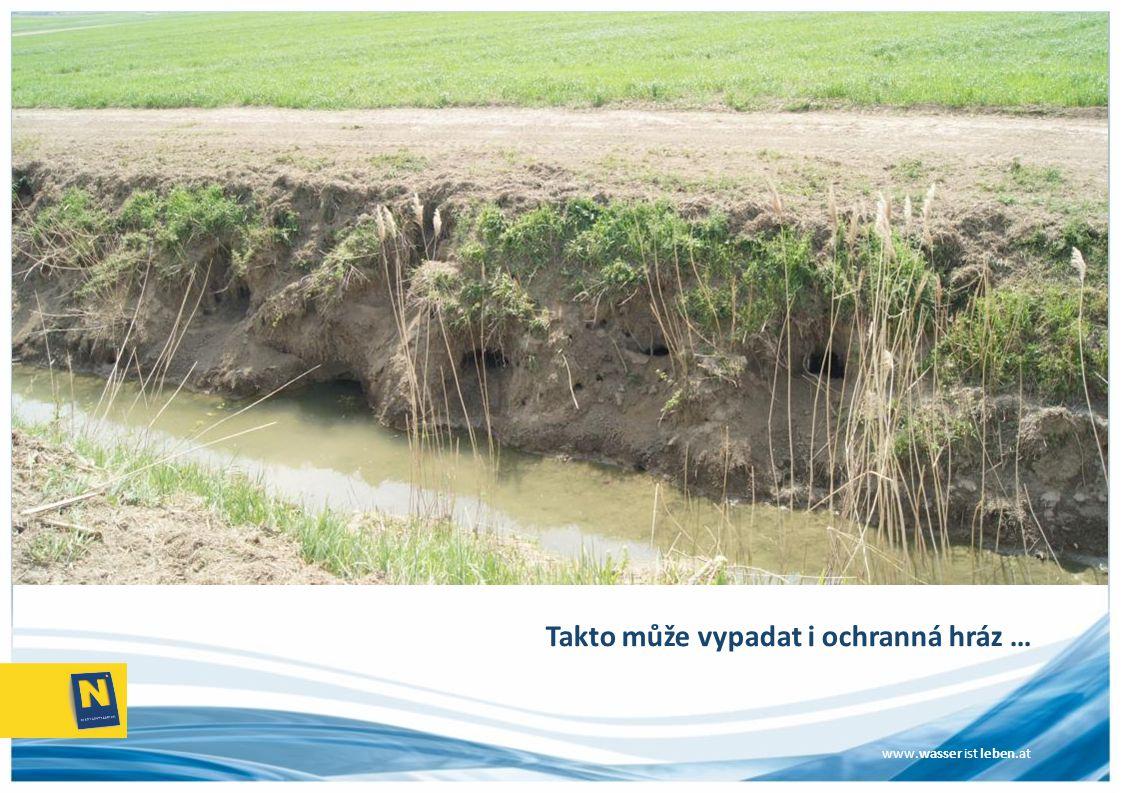 www.wasser ist leben.at Vrbový porost je zaplaven a trvale okusován