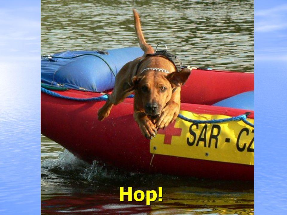 Pes určený pro boj ve vysoké trávě