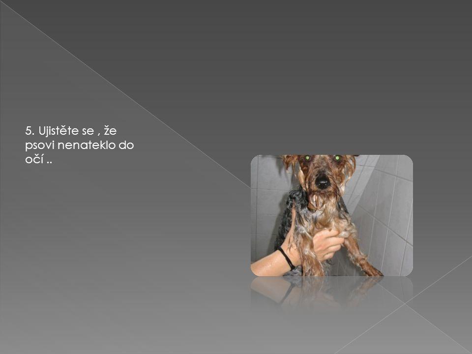 5. Ujistěte se, že psovi nenateklo do očí..