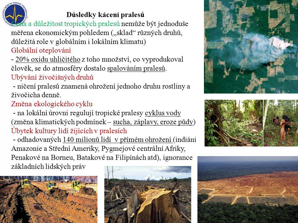 """Důsledky kácení pralesů Cena a důležitost tropických pralesů nemůže být jednoduše měřena ekonomickým pohledem (""""sklad různých druhů, důležitá role v globálním i lokálním klimatu) Globální oteplování - 20% oxidu uhličitého z toho množství, co vyprodukoval člověk, se do atmosféry dostalo spalováním pralesů."""