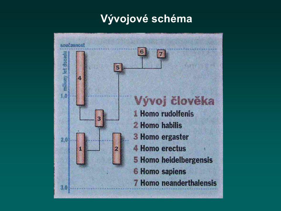 Vývojové schéma