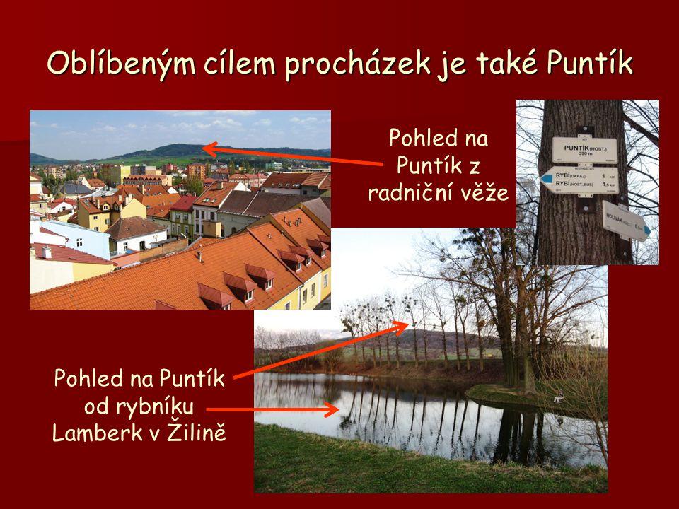 Oblíbeným cílem procházek je také Puntík Pohled na Puntík z radniční věže Pohled na Puntík od rybníku Lamberk v Žilině