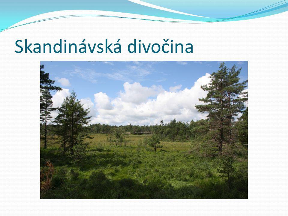 Skandinávská divočina