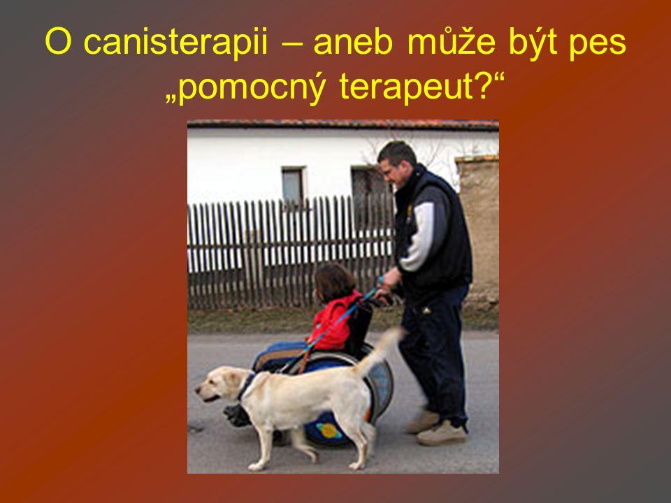 """O canisterapii – aneb může být pes """"pomocný terapeut?"""""""
