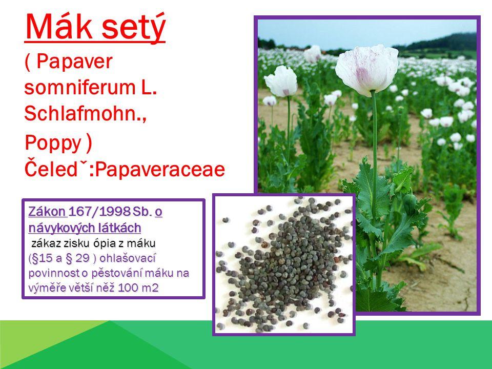 Mák setý ( Papaver somniferum L. Schlafmohn., Poppy ) Čeledˇ:Papaveraceae Zákon 167/1998 Sb. o návykových látkách zákaz zisku ópia z máku zákaz zisku