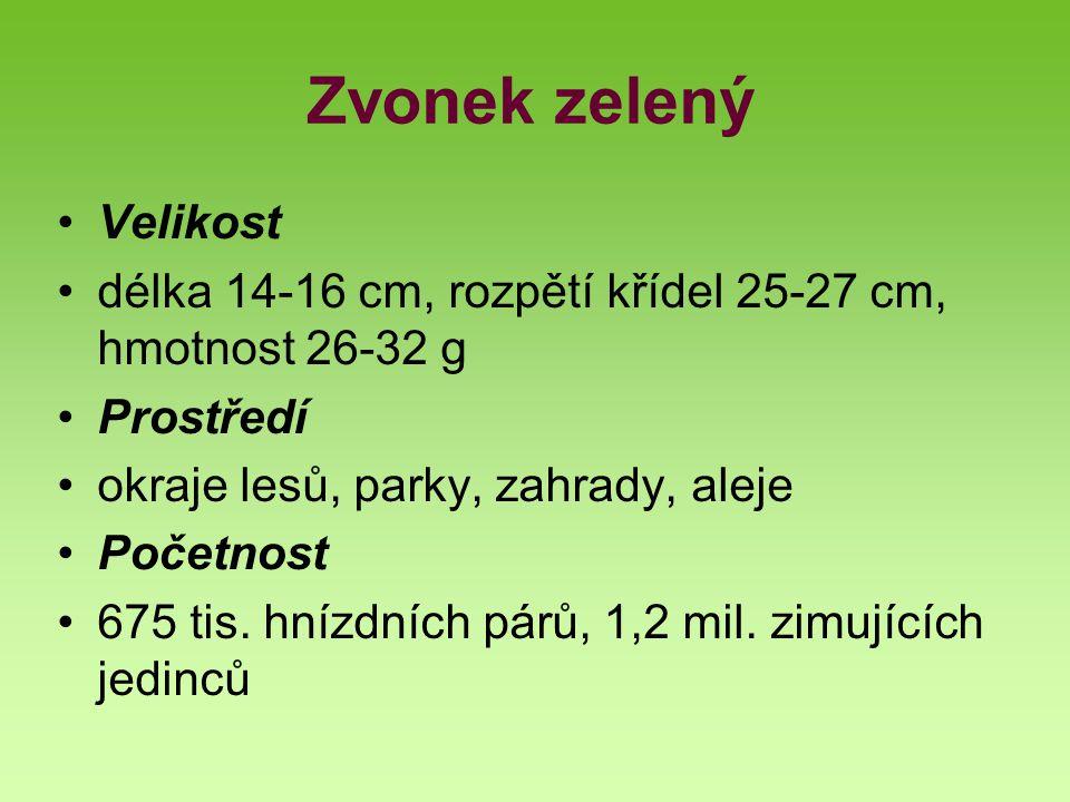 Zvonek zelený Velikost délka 14-16 cm, rozpětí křídel 25-27 cm, hmotnost 26-32 g Prostředí okraje lesů, parky, zahrady, aleje Početnost 675 tis. hnízd