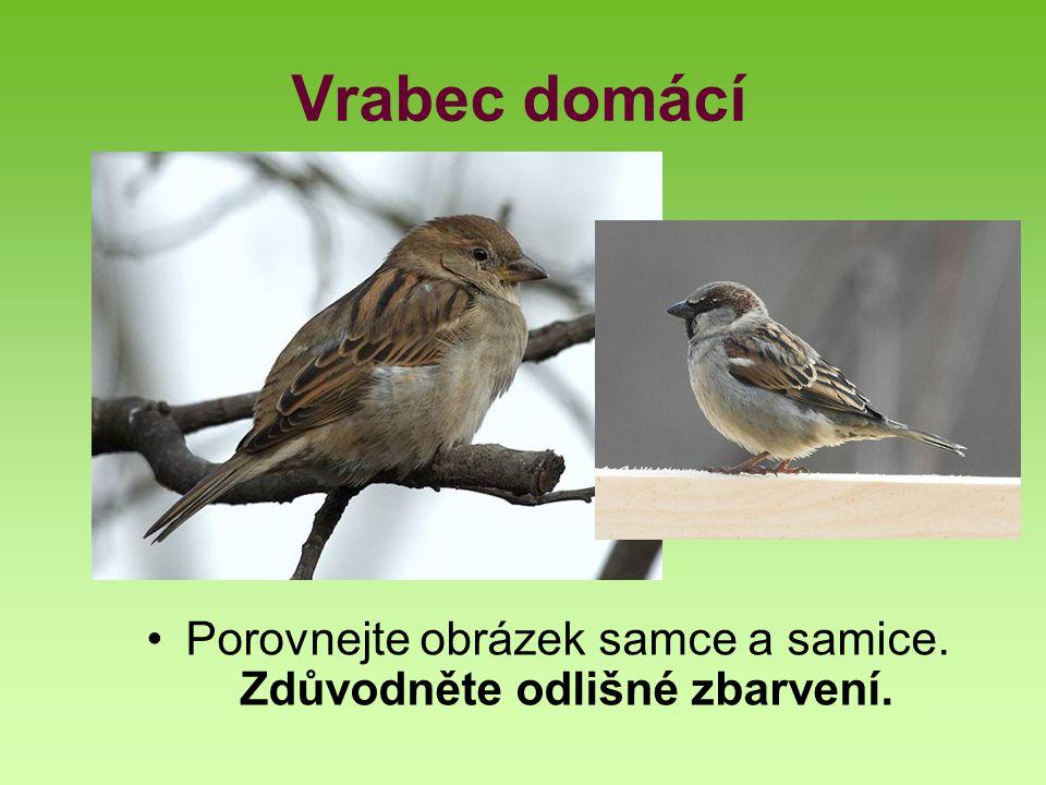 Drozd zpěvný Velikost délka 23 cm, rozpětí křídel 35-37 cm, hmotnost 70-85 g Prostředí lesy, parky, zahrady Početnost 600 tis.
