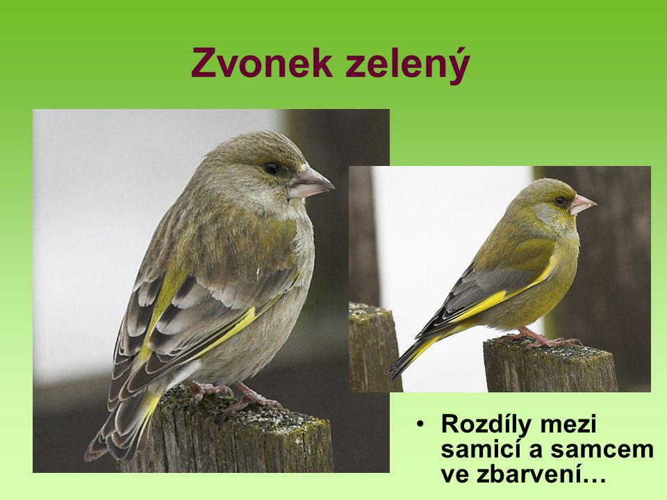 Zopakujme si na závěr: Které druhy jsme probrali.Kteří zástupci patří mezi stálé.