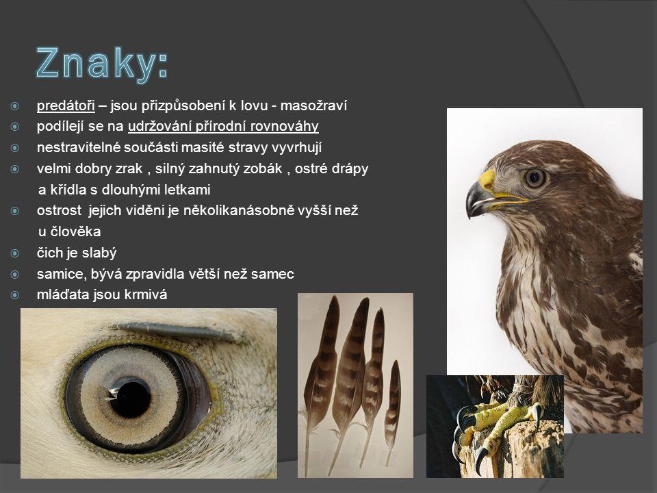  dorůstá 50 – 60 cm, v rozpětí křídel měří až 130 cm a váží 775 - 975 g  má ze všech ptačích druhů jedno z nejproměnlivějších zbarvení opeření, které se může pohybovat od čistě bílé až po téměř černou.