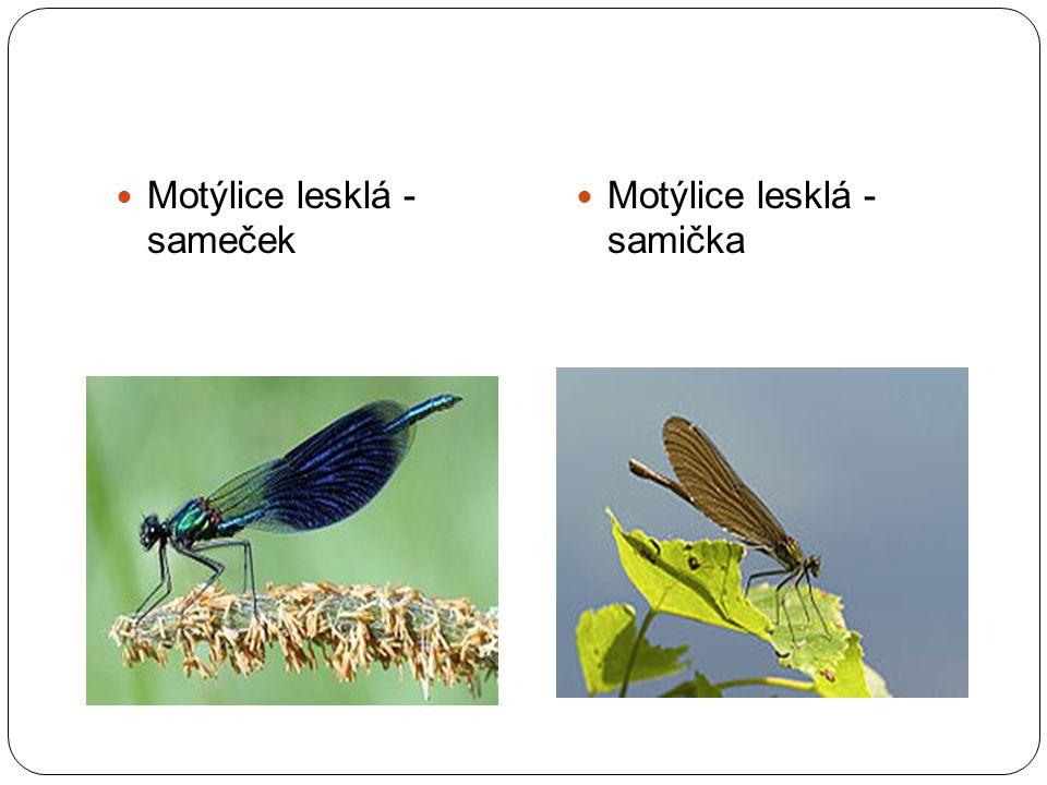 ZDROJE: http://cs.wikipedia.org/wiki/V%C3%A1%C5%BEka_plosk%C3%A1 http://nature.hyperlink.cz/uh/Kanada.htm http://www.naturefoto2000.com/fotografie.php?fid=1478 http://www.naturfoto.cz/sidelko-krouzkovane-fotografie-4901.html http://www.naturfoto.cz/sidelko-rumenne-fotografie-4907.html http://cs.wikipedia.org/wiki/Mot%C3%BDlice_obecn%C3%A1 http://cs.wikipedia.org/wiki/Mot%C3%BDlice_leskl%C3%A1 http://www.biolib.cz/cz/taxonimage/id19825/ http://www.photoserver.eu/zobrazeni_fotky.php?cislo_fotky=520449&fotky_autora= 1006307 http://www.photoserver.eu/zobrazeni_fotky.php?cislo_fotky=520449&fotky_autora= 1006307 http://www.dragonflies.cz/?p=2007