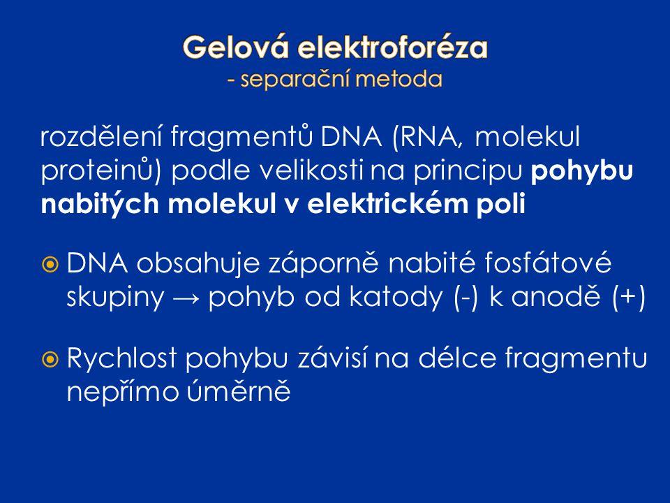 rozdělení fragmentů DNA (RNA, molekul proteinů) podle velikosti na principu pohybu nabitých molekul v elektrickém poli  DNA obsahuje záporně nabité f