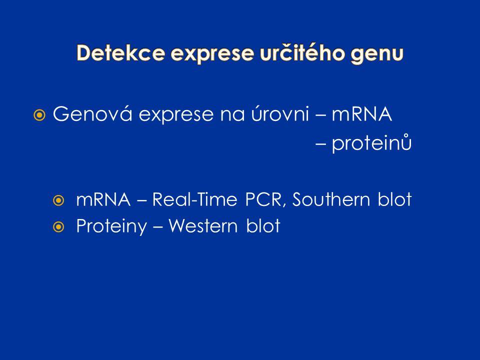  Genová exprese na úrovni – mRNA – proteinů  mRNA – Real-Time PCR, Southern blot  Proteiny – Western blot