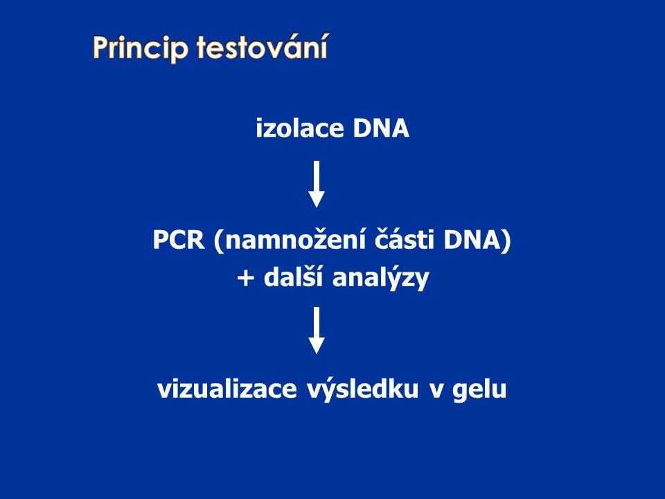 izolace DNA PCR (namnožení části DNA) + další analýzy vizualizace výsledku v gelu