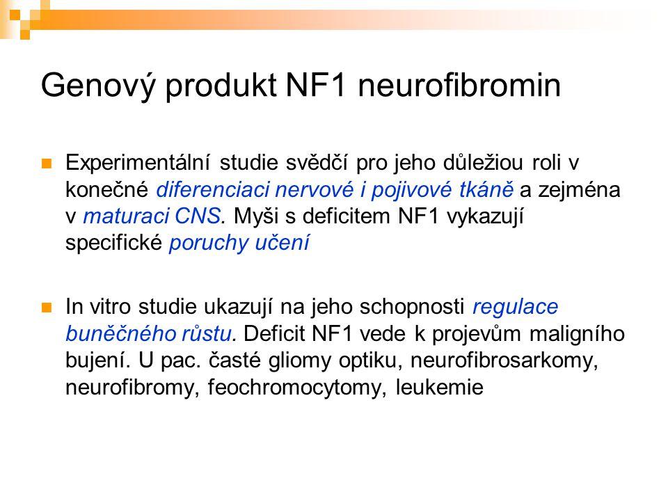 Genový produkt NF1 neurofibromin Experimentální studie svědčí pro jeho důležiou roli v konečné diferenciaci nervové i pojivové tkáně a zejména v matur