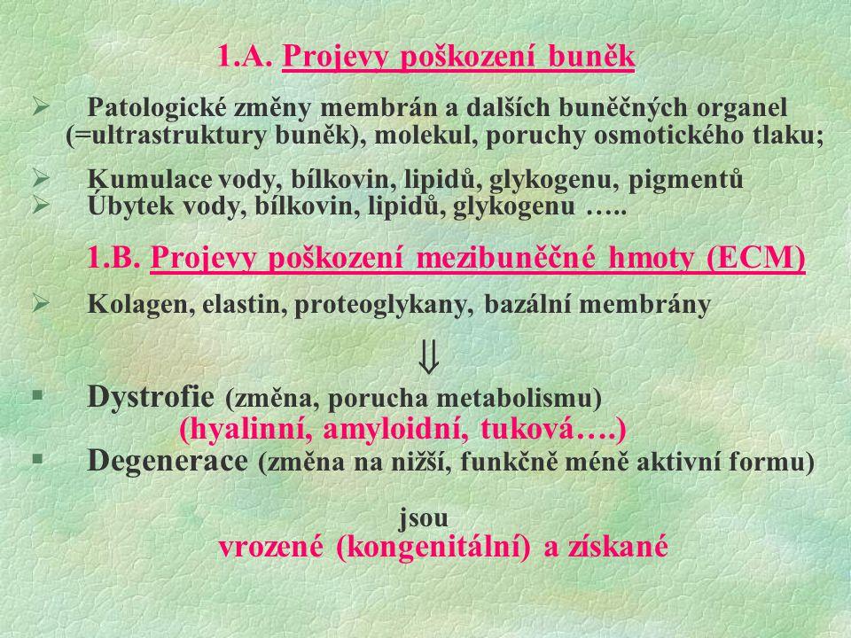1.A. Projevy poškození buněk  Patologické změny membrán a dalších buněčných organel (=ultrastruktury buněk), molekul, poruchy osmotického tlaku;  Ku