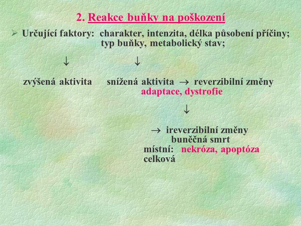 Základní projevy poškození organismu savců  Regresivní procesy  Poruchy růstu a diferenciace buněk  Vaskulární a cirkulační poruchy  Poruchy souvislosti orgánů  Zánět  Nádory  Vývojové anomálie